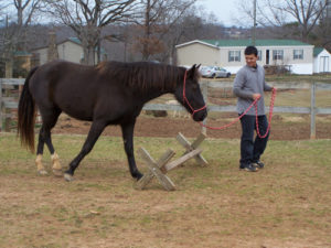 Equine Therapy at SHA